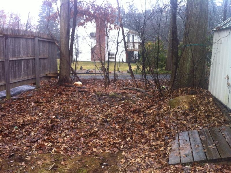 Yard Junk Removal